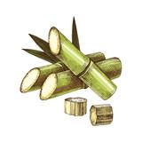 Hand drawn sugar cane - 270760548