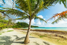 White Sand And Palm Trees In P...