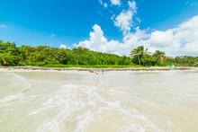 Clear Water And Green Plants In Pointe De La Saline Beach In Guadeloupe