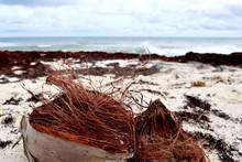 Broken Coconut On The Beach