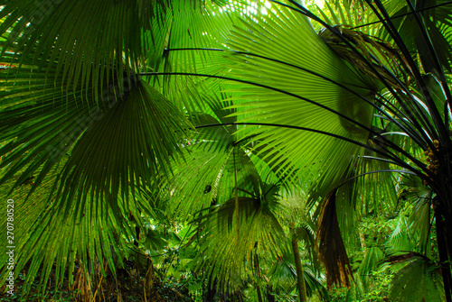Tropical palm leaves, floral pattern background, real photo #270780520