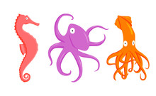 Set Of Vector Illustration Flat Cartoon Coral Seahorse, Purple Octopus, Orange Squid Flat Character On White Background. Cartoon Animals For Design, Background, Card, Print, Textile, Paper