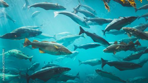 Big Cod łowi w wielkim zbiorniku na wodę.