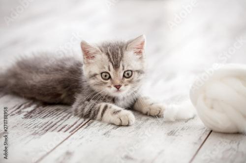 mata magnetyczna Curious gray kitten