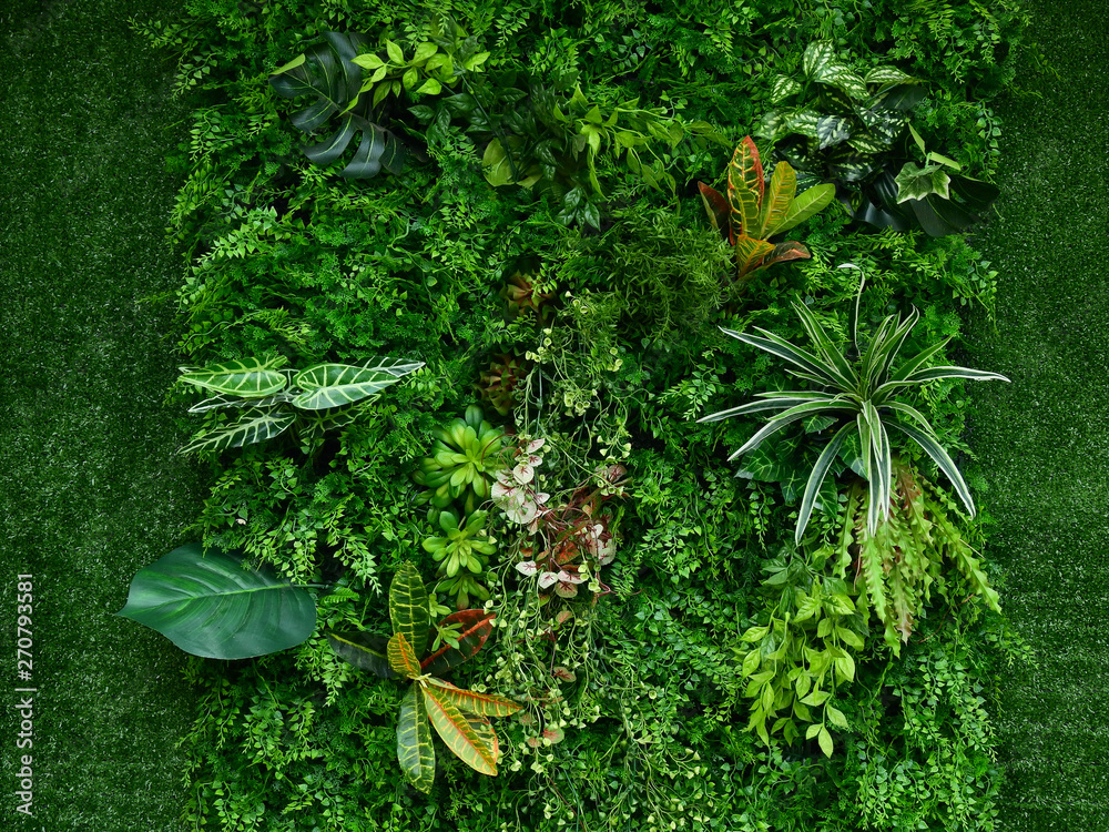 Fototapety, obrazy: artificial green plant wall