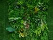 Leinwandbild Motiv artificial green plant wall