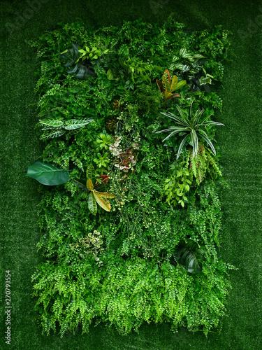 Fotografia artificial green plant wall