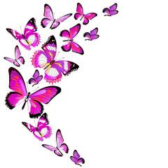 butterfly80