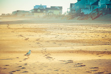 A Lone Seagull Standing On The Sand Of A Beach In Front Of Beach Homes In The Evening Light.