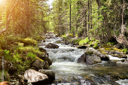 Aluminium Prints Forest river Mountain clean river with many rapids