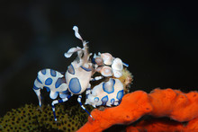 Incredible Underwater World - ...