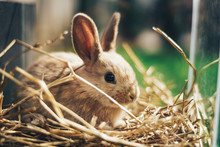 Beautiful Young Brown Rabbit On A Straw, Hay, Background.