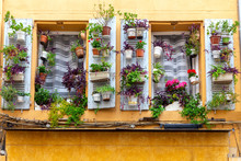 Aix-en-Provence. Window In The Orange Facade Of The Old House Decorated With Flowers.