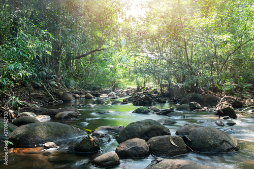 Green nature in jungle with small canal