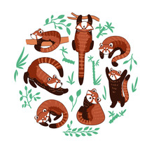 Red Panda Vector Illustration. Set Of Cute Drawings Of Ailurus Fulgens Playing In Different Poses In Circle Composition With Green Plants.