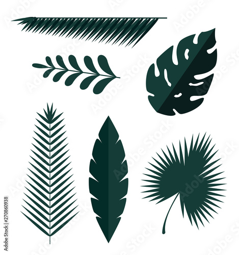 set of exotic leaves plants with branches Wall mural