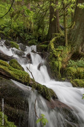 Moss and waterfalls along Wahkeena Creek, Columbia River Gorge in Oregon