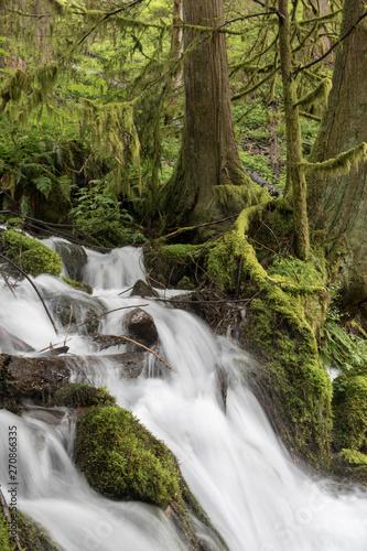 Moss, ferns and waterfall along Wahkeena Creek, Columbia River Gorge, Oregon