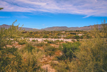 Dry Wash In Cave Creek In The Springtime