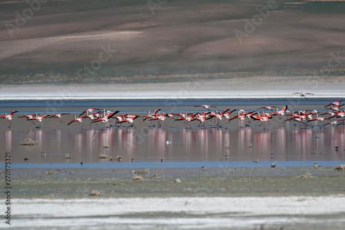 Garden Poster Flamingo Nature and birds. Flamingos. Nature habitat background.
