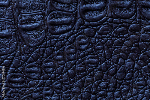 Poster Crocodile Navy blue leather texture background, closeup. Reptile skin, macro.