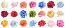Set Of Different Tender Peonies On White Background. Fragrant Spring Flowers