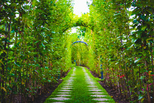 Green Tunnel In Fresh Spring Day. Way To Nature.  Green Trees And The Way.