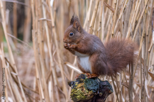 Foto auf Gartenposter Eichhornchen Squirrel on a tree eating seeds