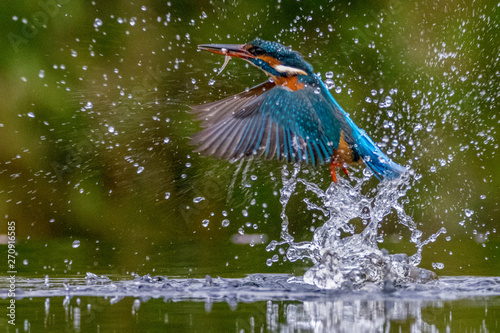 Nature Kingfisher with fish emerge from surface