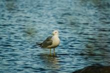 Seagull Bird And Its Shadow Wa...