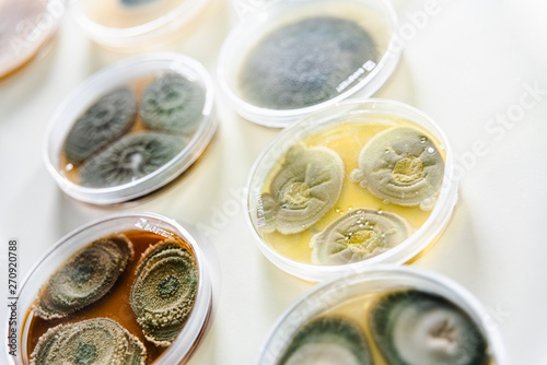 Obraz na plátně  Valencia, Spain - May 25, 2019: Samples in petri dishes of different types of fungi and bacteria to analyze contaminated water and food in a laboratory