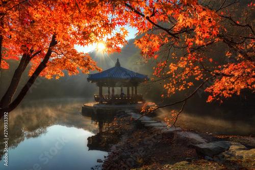 Foto auf AluDibond Schokobraun Autumn in Naejangsan National park, South Korea.