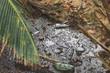 Müll am Strand Panamas