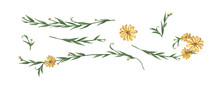 Yellow Flower And Leaves Set. Line Borders, Laurels And Text Divider. Watercolor Illustration.