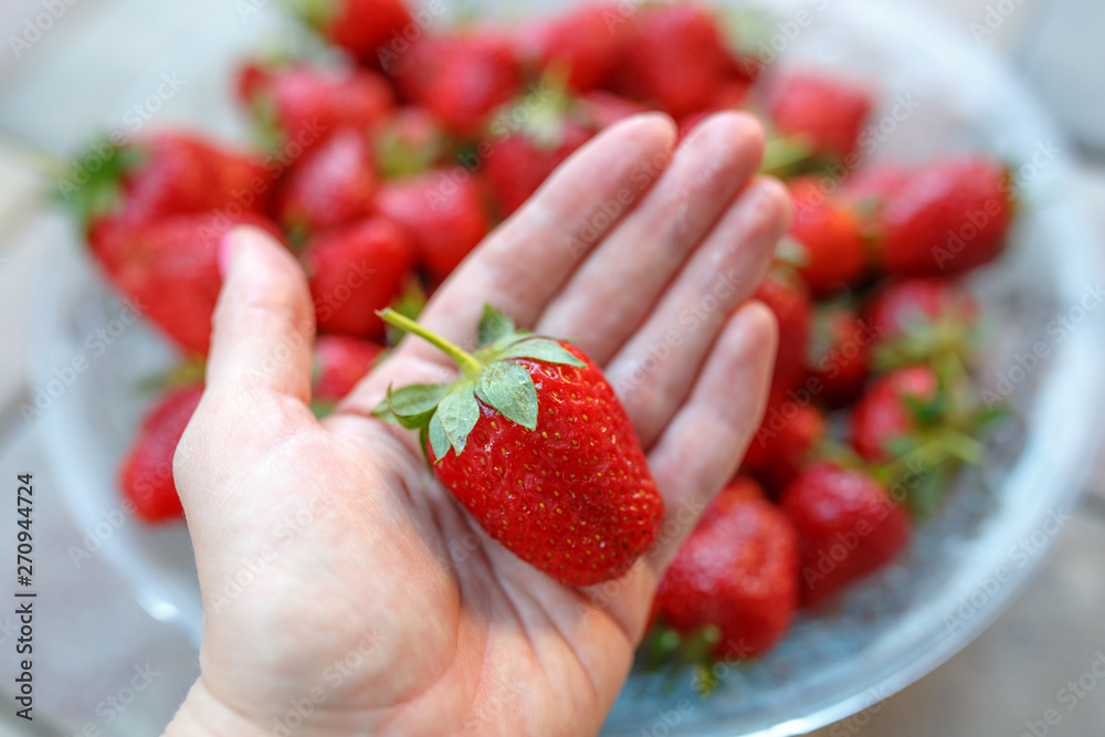 Fototapety, obrazy: Big red strawberrie in the hand of the girls. girl holding natural, organic strawberry