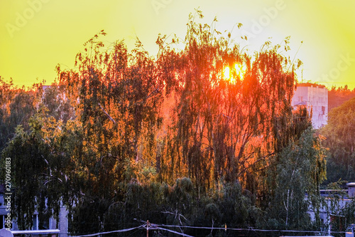 Tuinposter Zwavel geel dramatic red sunset colors in the sky above trees and fields