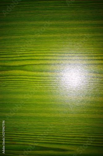 Obraz na plátně  grünes Holz