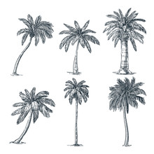 Tropical Coconut Palm Trees Se...