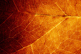 Abstract organic texture of leaf.