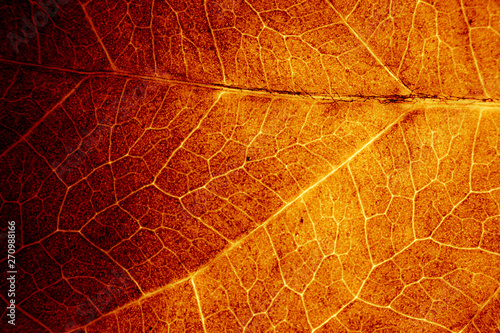 Foto op Plexiglas Macrofotografie Abstract organic texture of leaf.