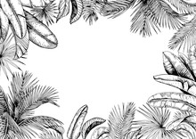 Tropical Frame With Palm And Banana Leaves. Black And White. Hand Drawn Vector Illustration.