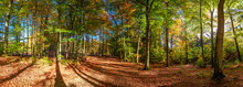 Panorama Of Green And Gold Forest In The Autumn, Europe