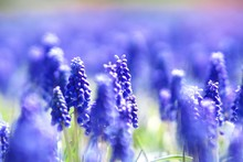 美しいお花畑