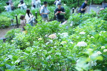 6月の鎌倉のお寺