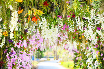 FototapetaOrchid garden / Tropical plant beautiful flower in the spring summer park