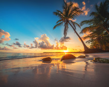 Palm Tree And Tropical Beach In Punta Cana, Dominican Republic