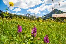 Allgäu - Frühling - Stadel - Berge - Blumen