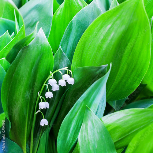 Poster Muguet de mai White lily of the valley flowers on green leaves blurred background close up, may lily flower macro, Convallaria majalis in bloom, beautiful spring or summer nature floral blossom design, copy space
