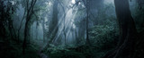 Fototapeta Las - Deep tropical forest in darkness
