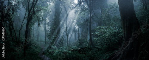 Fotobehang Zwart Deep tropical forest in darkness